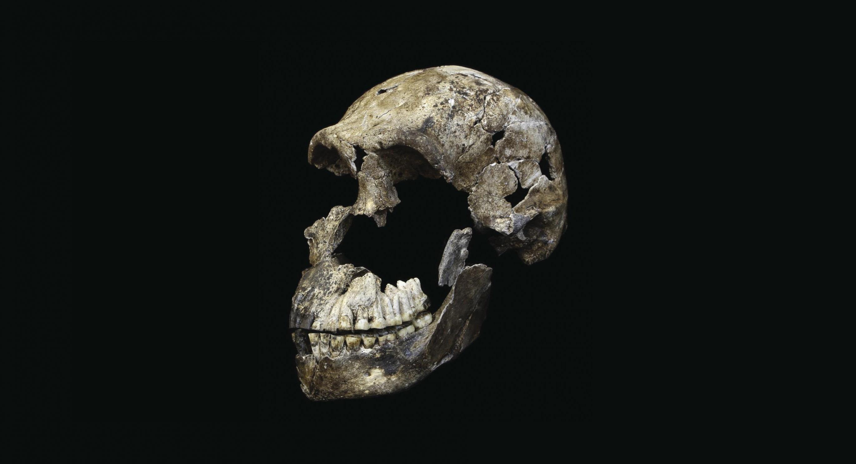 Homo naledi Neo paleoantropologija